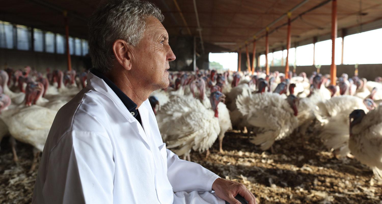 Allevamenti e rispetto degli allevatori e degli animali