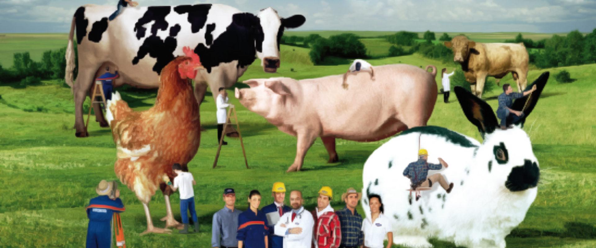 Frammento del cartellone pubblicitario del 2008 di Mangimi Veronesi